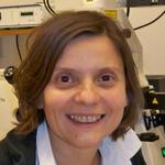 Dr Vladan Vukojevic